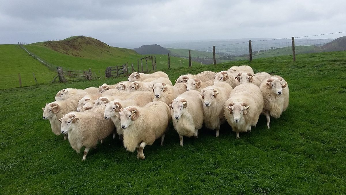 Providing environmental goods could help Welsh sheep farms