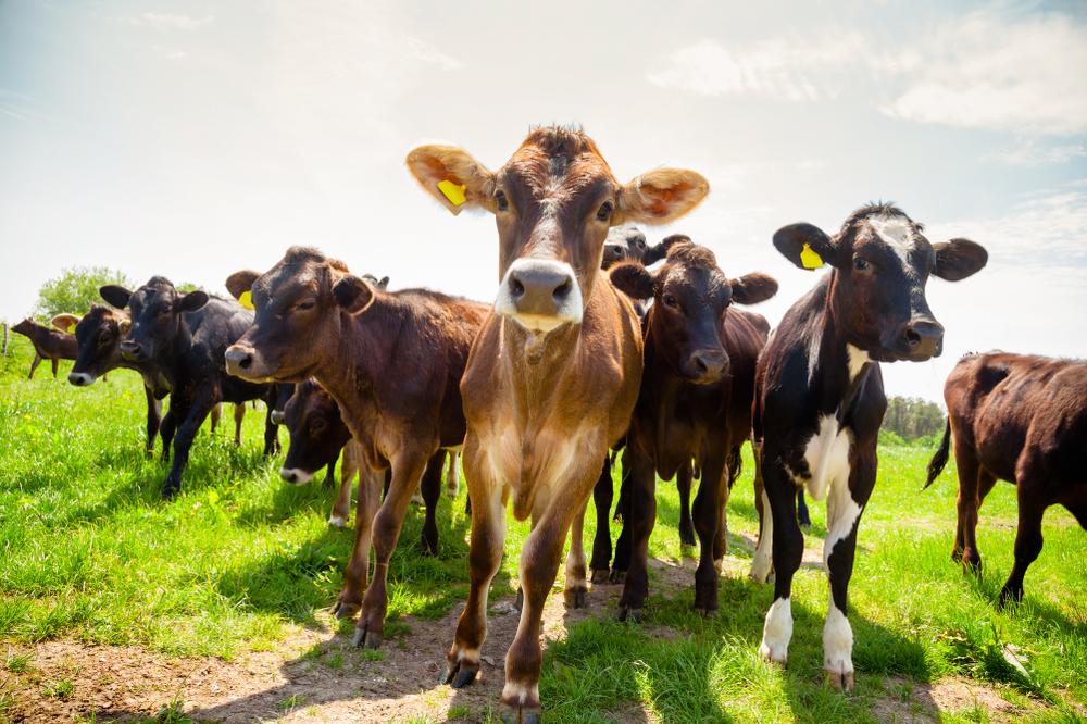 Welsh walkers and farmers warned of livestock danger