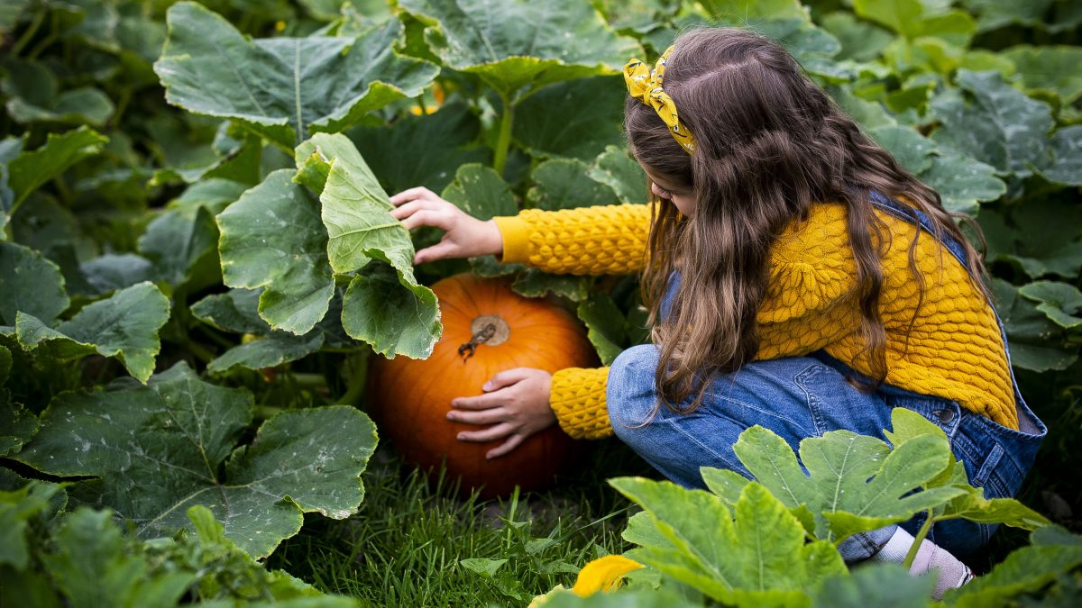 Mid Wales farm diversifies into pick your own pumpkins during October