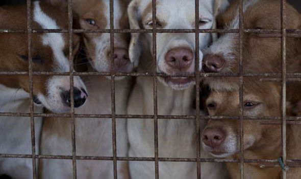 Trading Standards Investigation into illegal dog breeding results in a significant number of dogs being seized and signed over