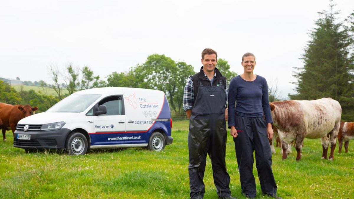 New cattle-focused veterinary practice launches in West Wales
