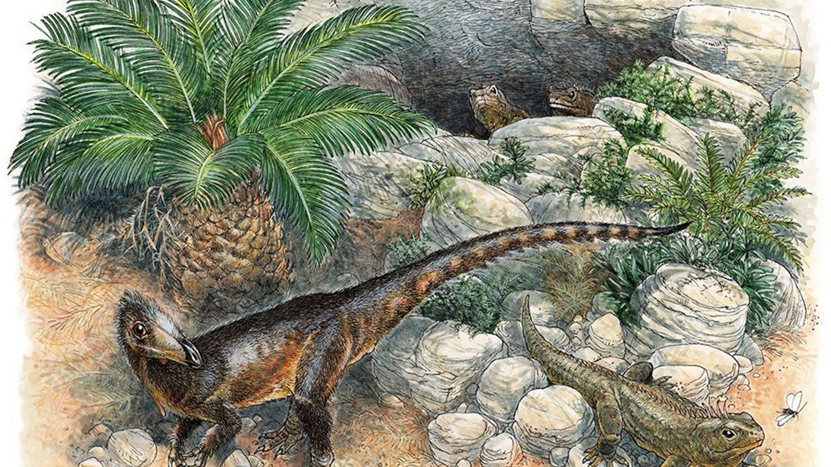 Pendraig: The oldest carnivorous dinosaur in the UK
